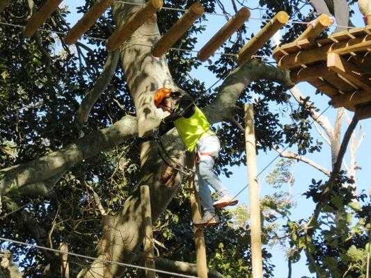 Trees Adventure Nowra
